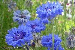 Bon 14 juillet  dans Avec du fil et des aiguilles a-bleuet-petit