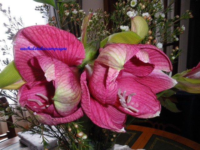 Quelques fleurs dans De tout et rien ... amarylis-1